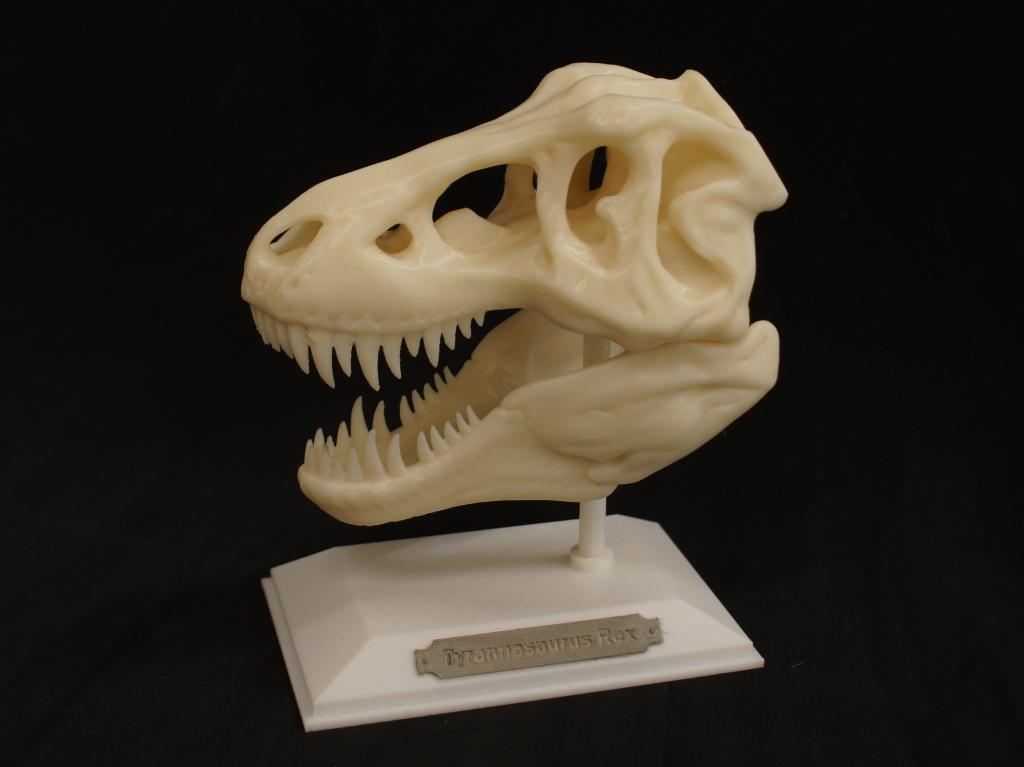 T-Rex teschio